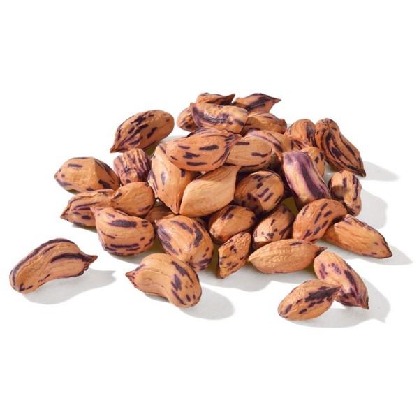 Wild-Erdnüsse